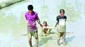 গাজীপুরের শ্রীপুরে স্কুল পড়ুয়া ৩ সহোদরের স্কুলব্যাগের সাথে কাঁধে লাঙলের জোয়াল
