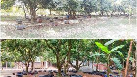 দিনাজপুর চিরিরবন্দরে লিচু বাগান হতে ১ কোটি ২০ লাখ টাকার মধু সংগ্রহ